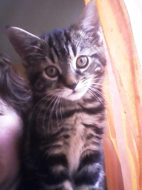 Mes mini tigres et mes longues oreilles!! P20-1010