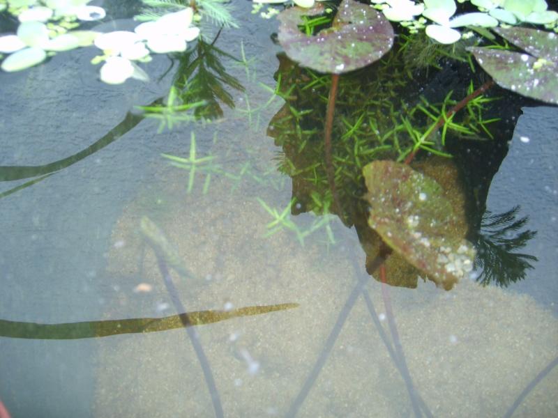 Bassin d'ext. d'env. 100 litres S6000416