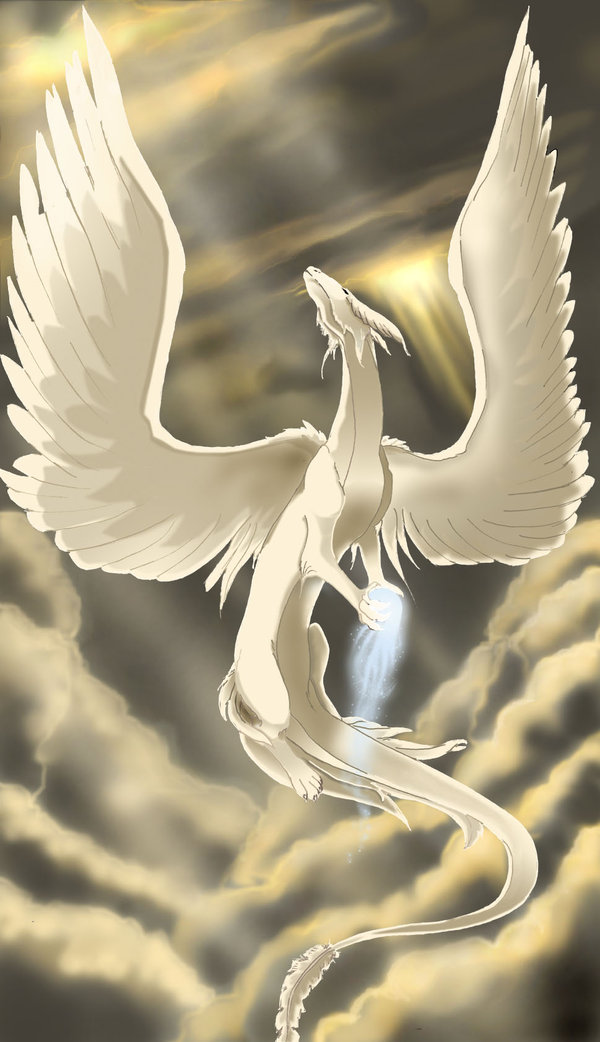 Dragons blancs Angel_10