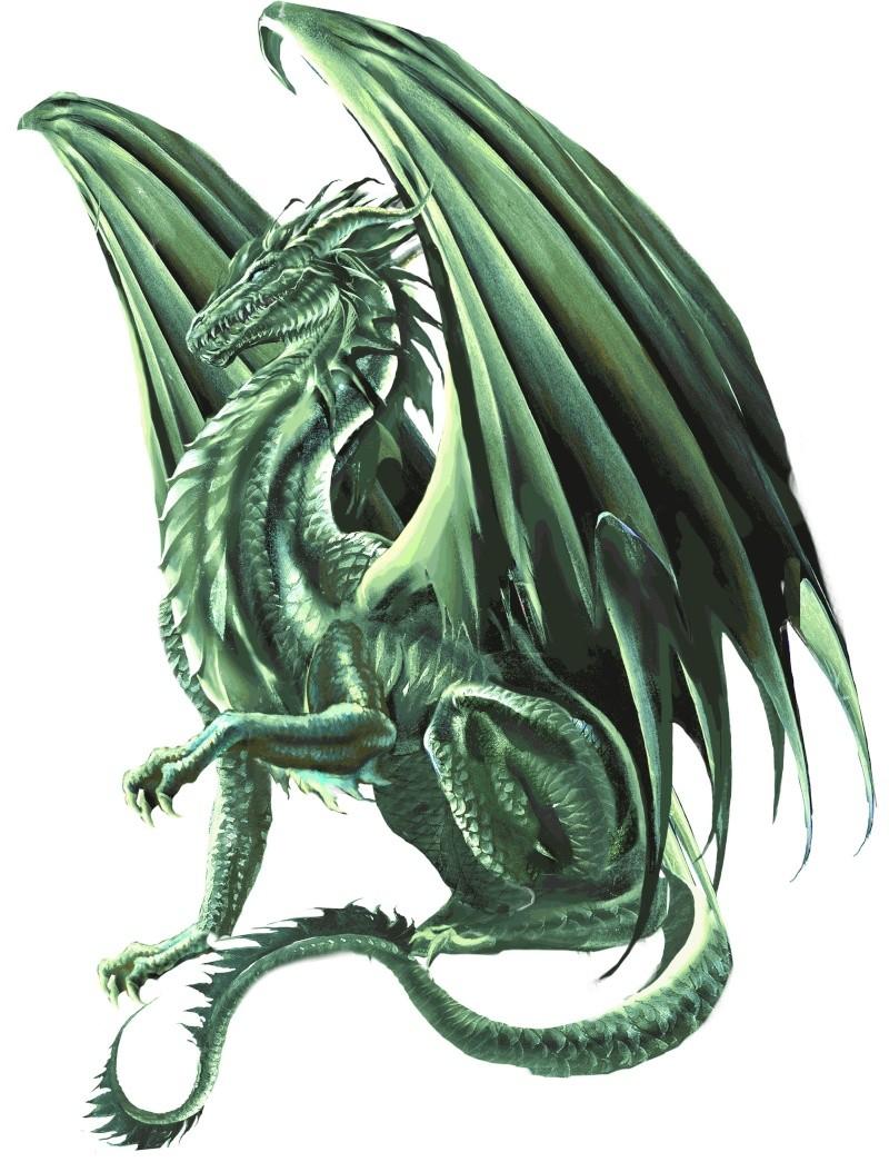 Dragons verts Cat_1610
