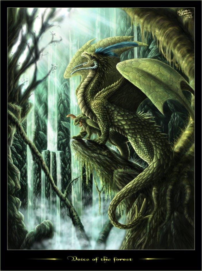 Dragons verts Dragon25