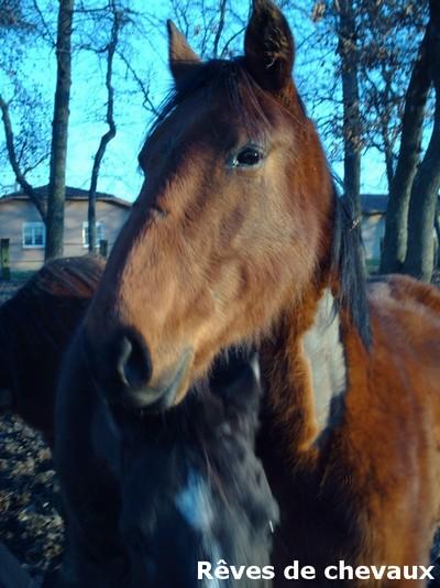 SAULE - TF 3 ans (ancien cheval de laboratoire) Saule111