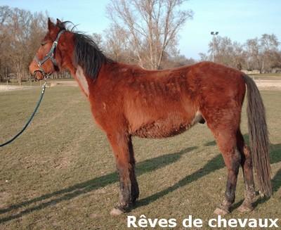 SAULE - TF 3 ans (ancien cheval de laboratoire) Saule112