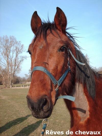 SAULE - TF 3 ans (ancien cheval de laboratoire) Saule12