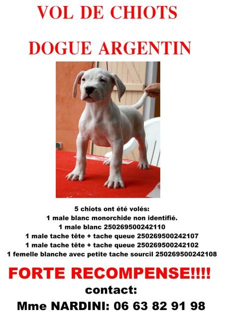5 CHIOTS DOGUE ARGENTIN VOLE!! Affich10