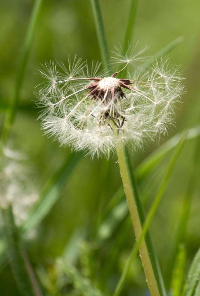 Fleurs du Vercors. Img_7311