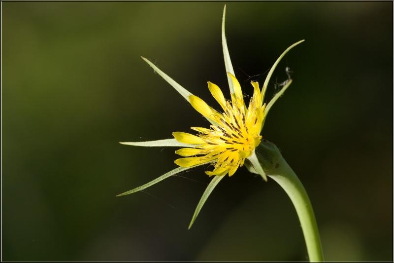 Fleurs du Vercors. Img_7412