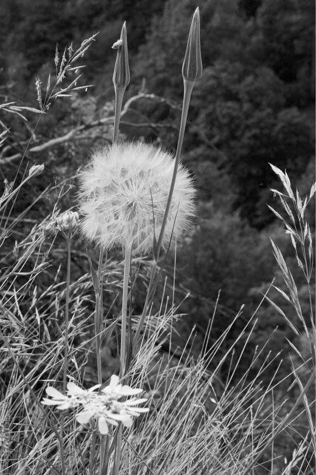 Fleurs du Vercors. Img_7413