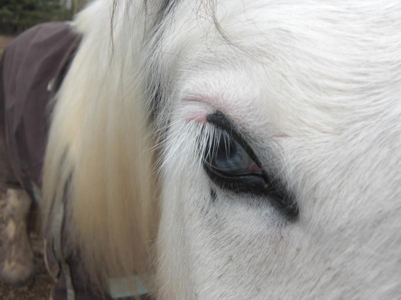 Le pie-noir aux yeux bleus Cimg1011