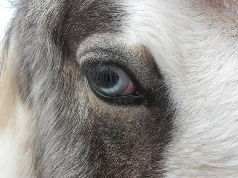 Le pie-noir aux yeux bleus Cimg1012