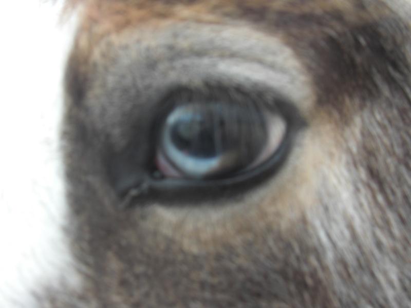 Le pie-noir aux yeux bleus Cimg1013