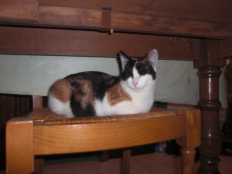 chatons : photos individuelles du 18 mai p4. 1 à réserver Cimg1310