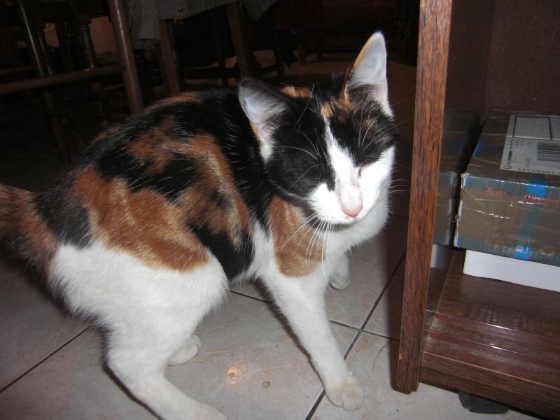 chatons : photos individuelles du 18 mai p4. 1 à réserver Cimg1311