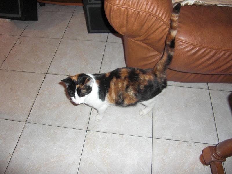 chatons : photos individuelles du 18 mai p4. 1 à réserver Cimg1312