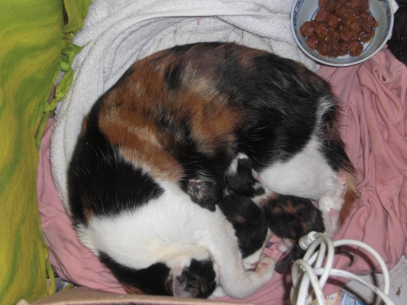 chatons : photos individuelles du 18 mai p4. 1 à réserver Cimg1314