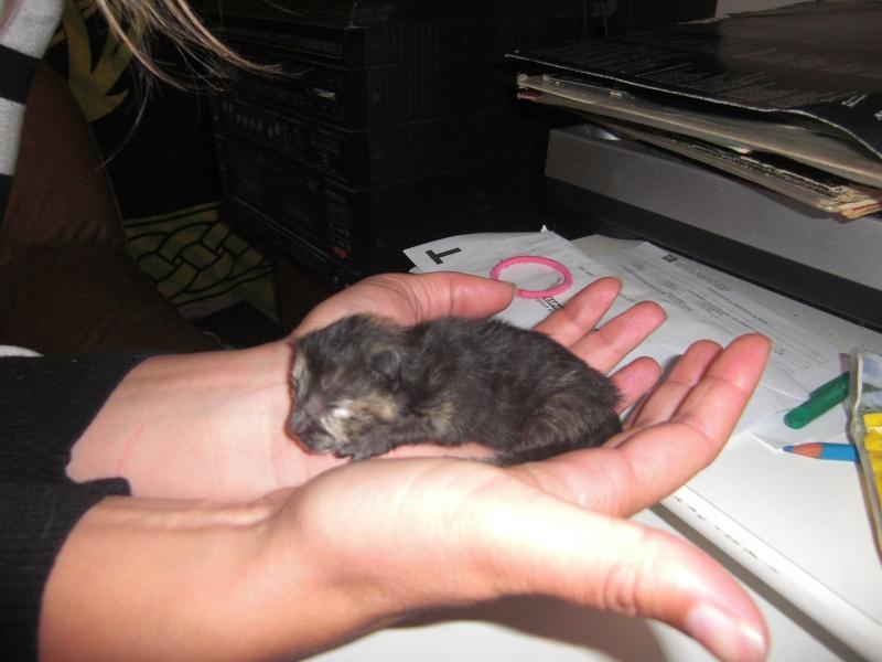chatons : photos individuelles du 18 mai p4. 1 à réserver Cimg1316