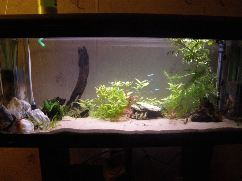 aquarium 120L - Page 2 P3230010