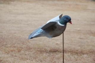 pigeon decoys Pigeon10
