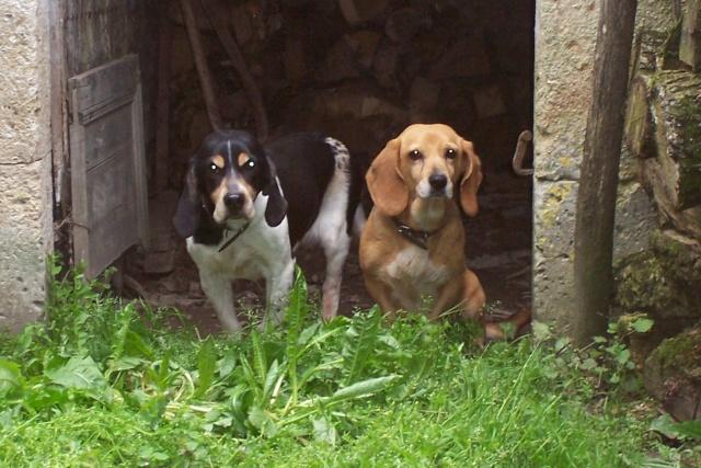 TAMBELLE & TOSCA, croisées beagle femelles, 14 ans (16) Divers19