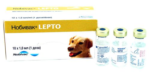 Вакцинация собак 2077_010