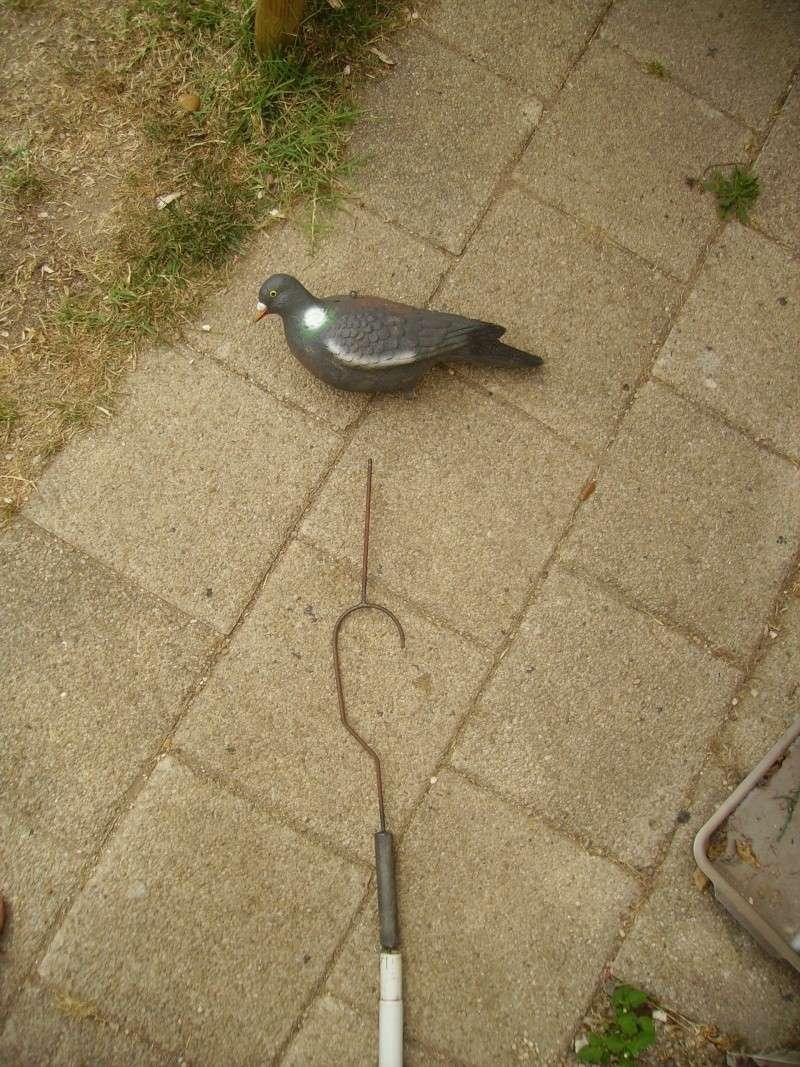 Placer des formes de pigeons dans les arbres Imgp0010