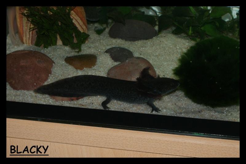 Les animaux vivant dans l'eau Blacky11