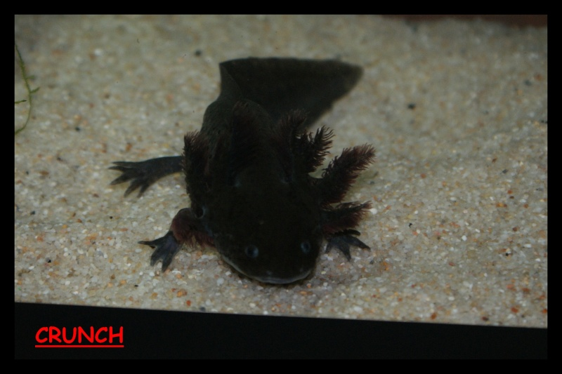 Les animaux vivant dans l'eau Crunch11