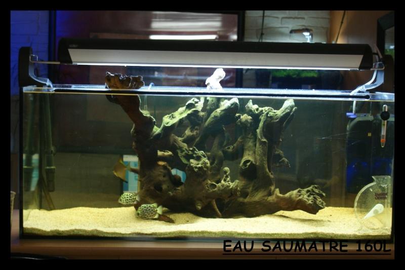 Les animaux vivant dans l'eau Eau_sa11