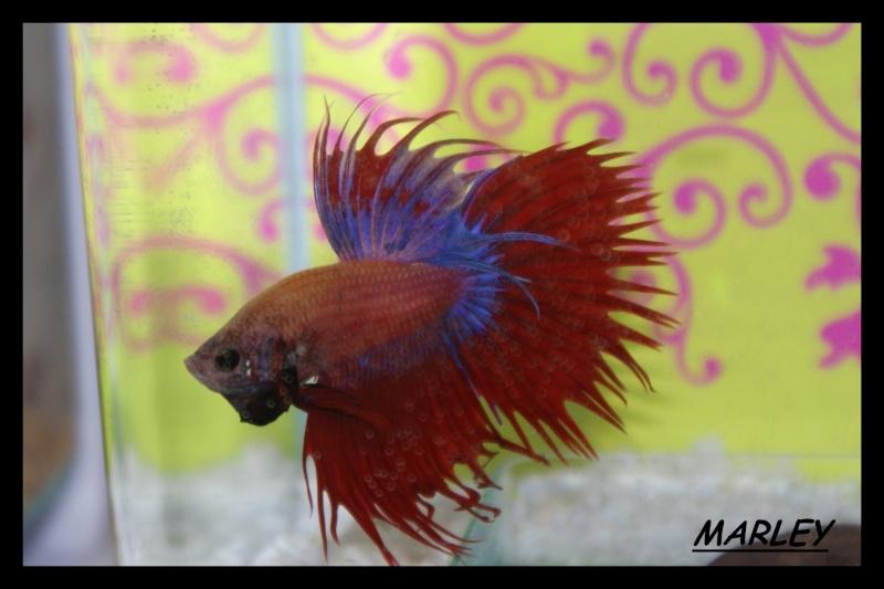 Les animaux vivant dans l'eau Marley12