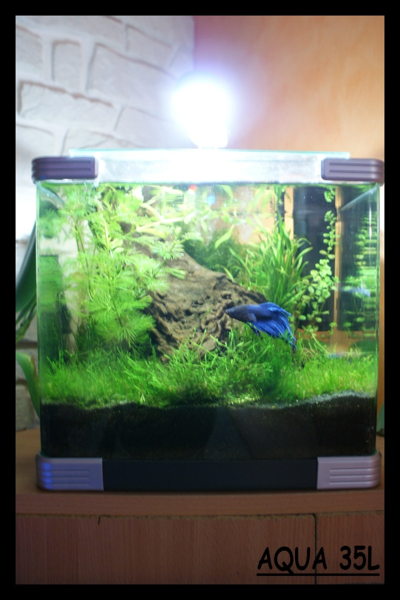 Les animaux vivant dans l'eau Nano_c11