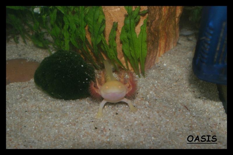 Les animaux vivant dans l'eau Oasis11