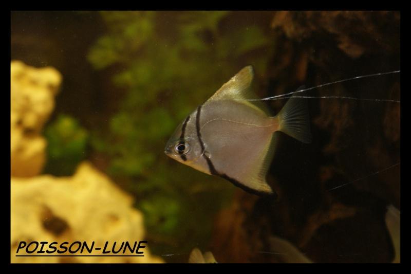Les animaux vivant dans l'eau Poisso10