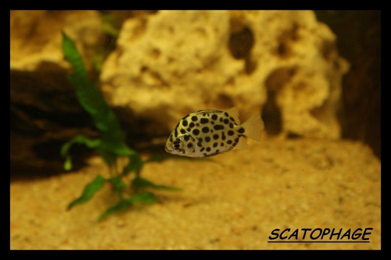 Les animaux vivant dans l'eau Scatop10