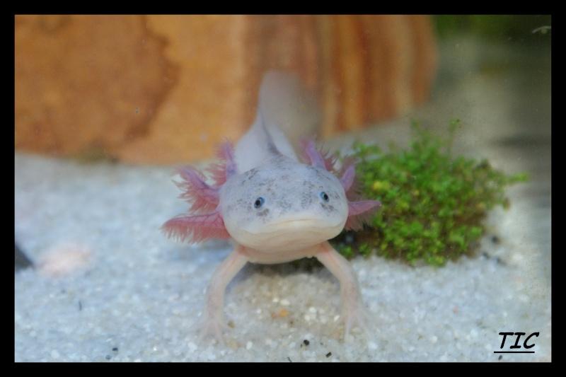 Les animaux vivant dans l'eau Tic11
