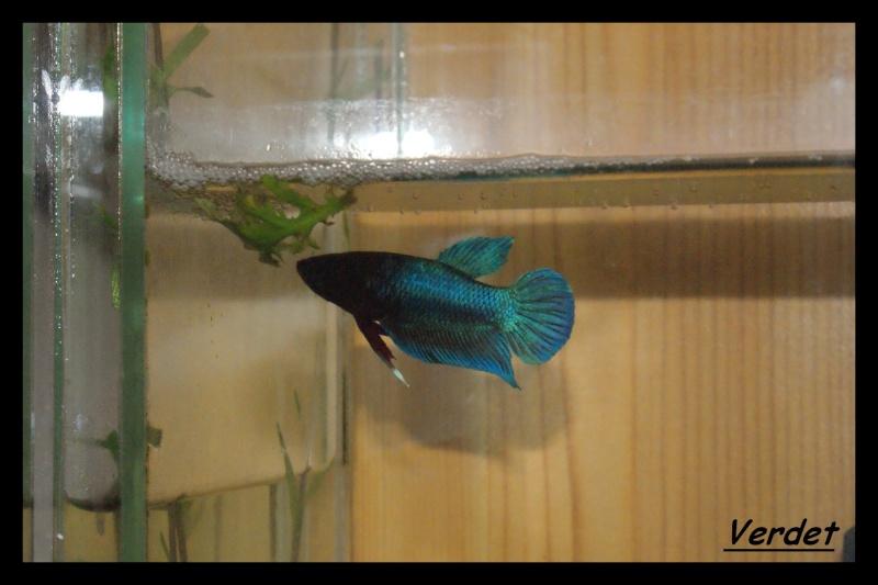 Les animaux vivant dans l'eau Verdet12