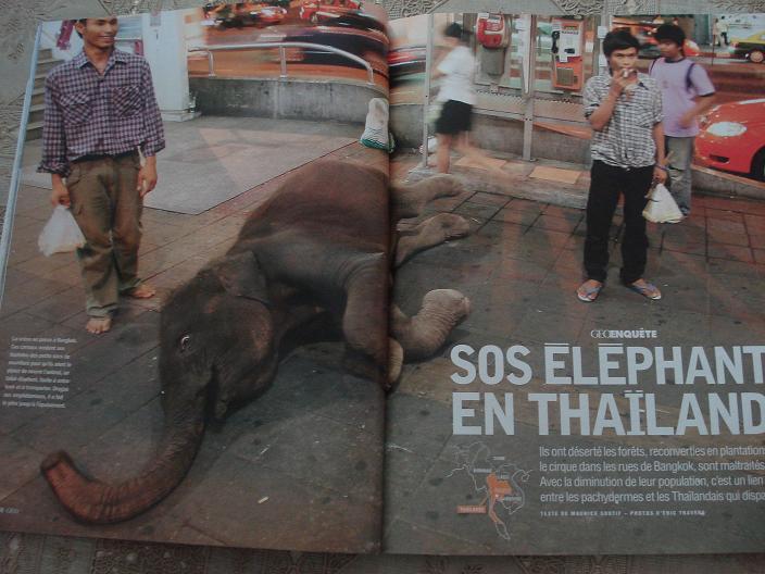 STOP AUX TORTURES DES BEBES ELEPHANTS POUR LES TOURISTES... Line_113