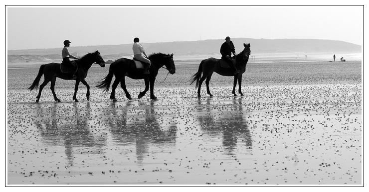chevaux à Sciotot Chevau10