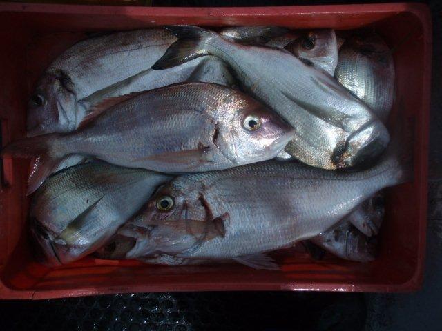 Pesca de Mar P1010019
