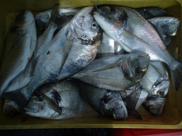 Pesca de Mar P1010020