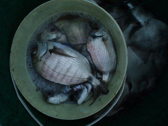 Pesca de Mar P1010021