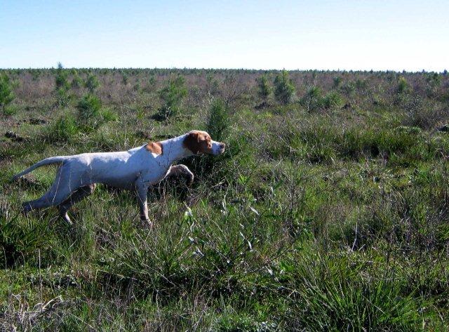 Mel - cadela magnifica Urugua10