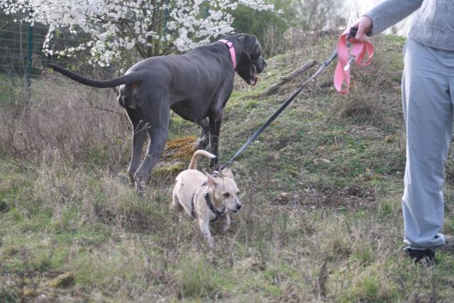 Choupette, Simba et Vanda au terrain de cross Img_8721