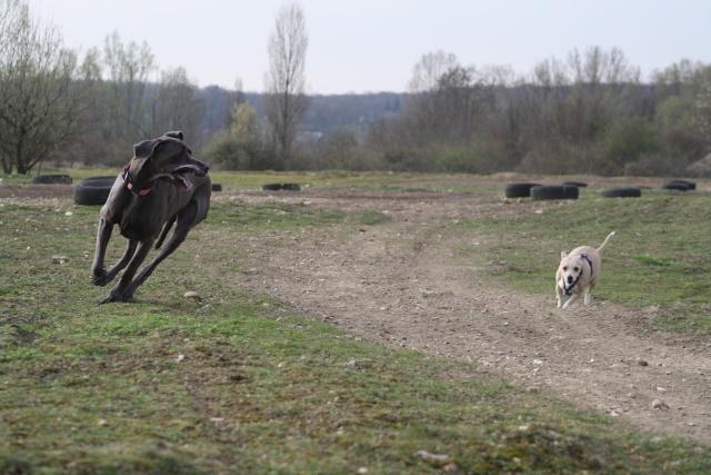 Choupette, Simba et Vanda au terrain de cross Img_8819