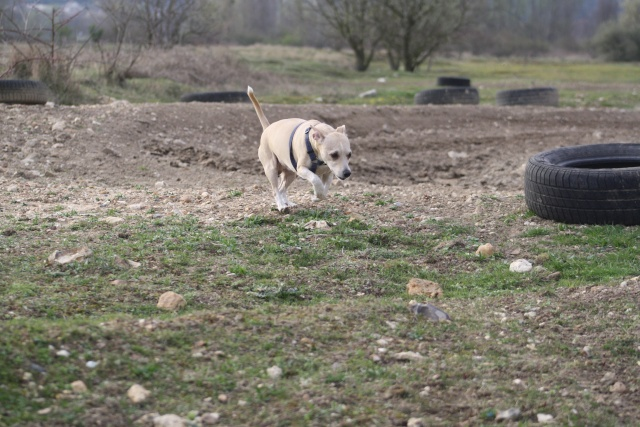 Choupette, Simba et Vanda au terrain de cross Img_8823