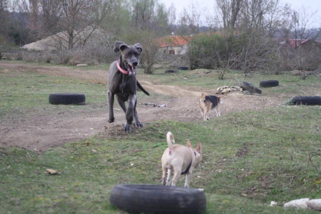 Choupette, Simba et Vanda au terrain de cross Img_8855