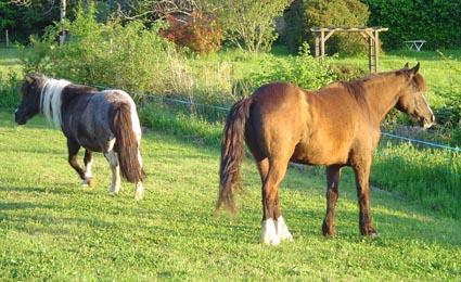 ARTHUR & AKIM - ONC poneys présumés nés en 1989 - adoptés en août 2009 par kalkita  Arthur10