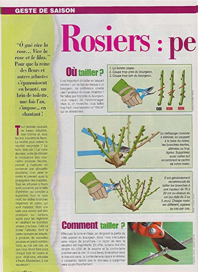 Calendrier des tailles au jardins Rosier10