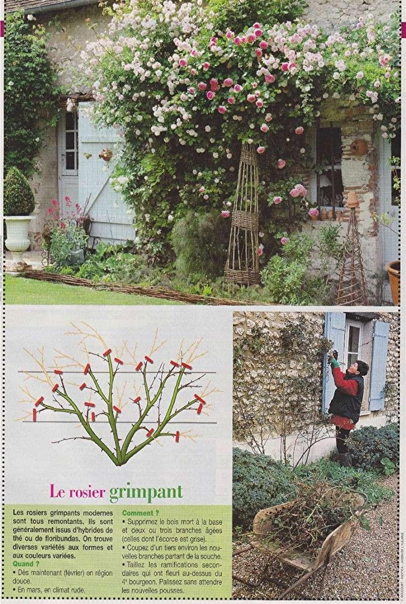 Calendrier des tailles au jardins Rosier12