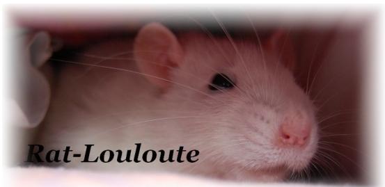 [SITE] Rat-louloute  ->  site d'une amoureuse des rats Image_12