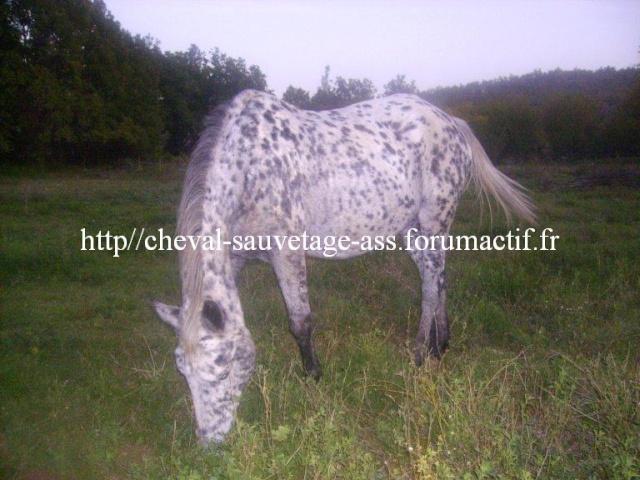 Quelques sites qui sauvent des chevaux... Apalos10